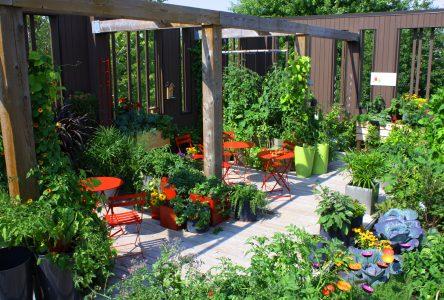 Nouvelles formations sur l'agriculture urbaine à l'ITA