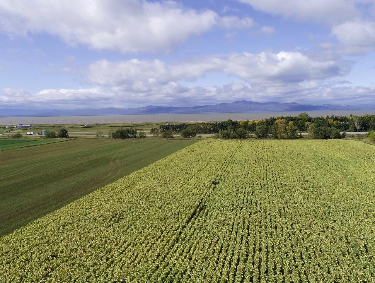 Le premier Colloque grandes cultures et plantes fourragères biologiques aura lieu à l'ITA