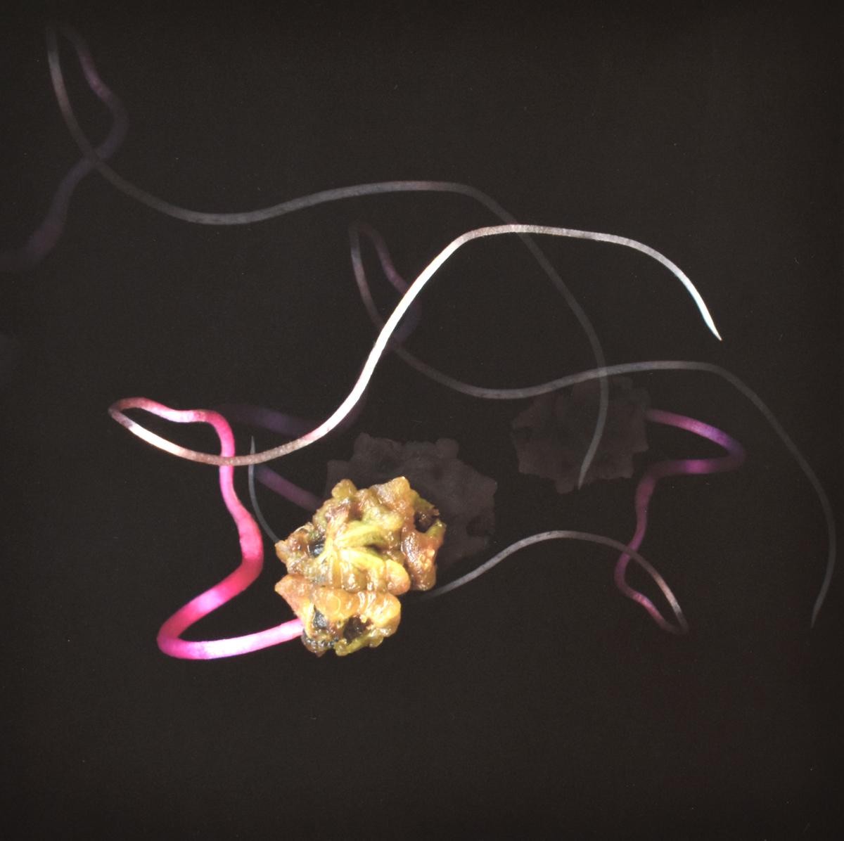 «Organismes artistiquement modifiés»