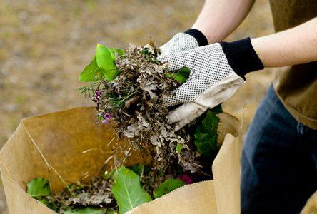 Reprise des cueillettes de résidus verts à Montmagny