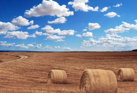 12,1 millions de dollars supplémentaires versés aux producteurs de foin et de pâturages dans le cadre du Programme d'assurance récolte